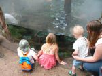 The kids look at the underwater lair of the giant river otter.