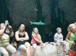 Every one watches in amazement as sharks and rays swim by.