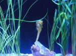 The seahorse exhibit is a favorite of mom's because it's the male that takes care of the young.